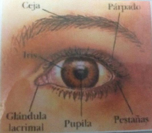partes-del-ojo